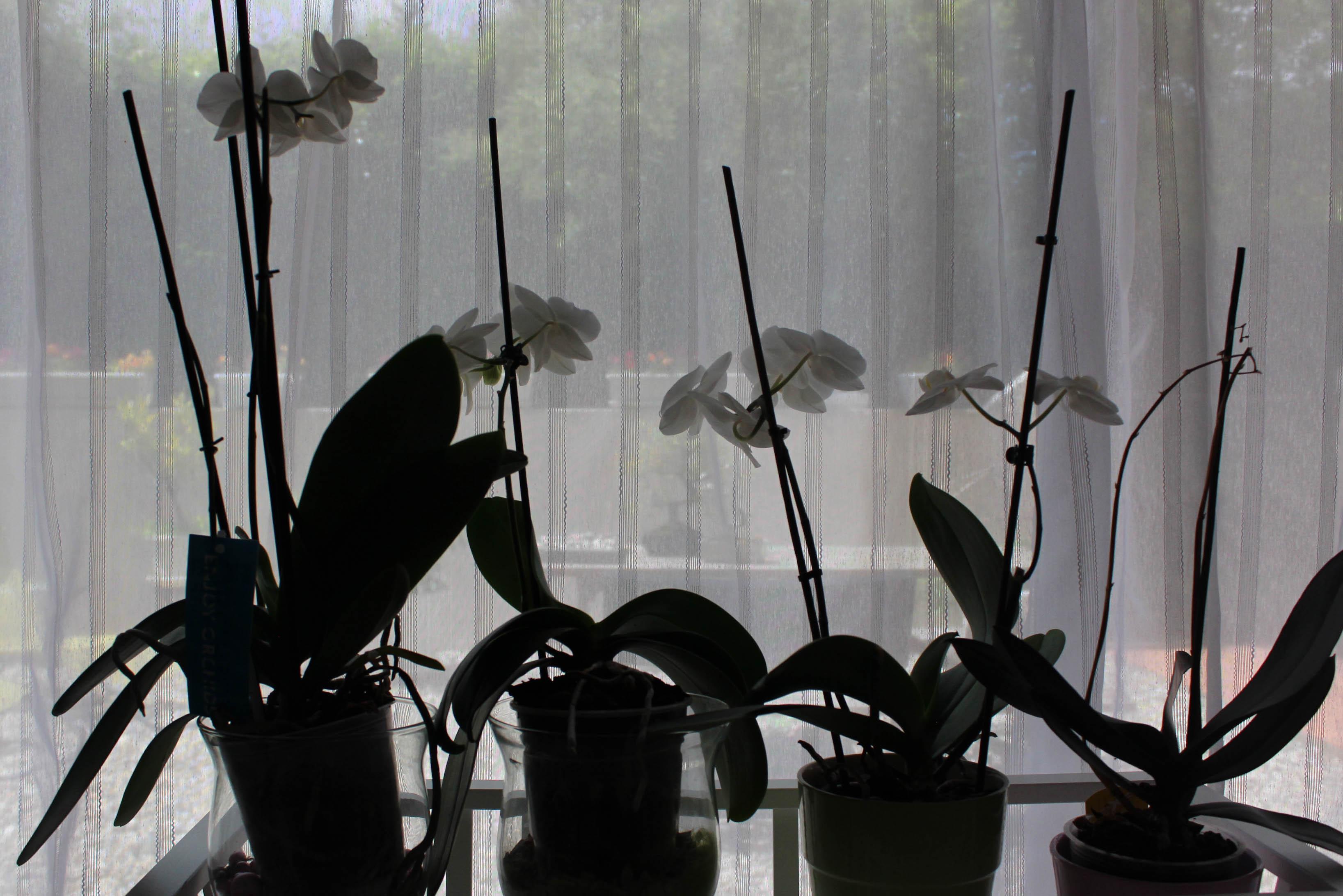 Mes orchidées en fleurs - les lubies de Louise (4 sur 4)