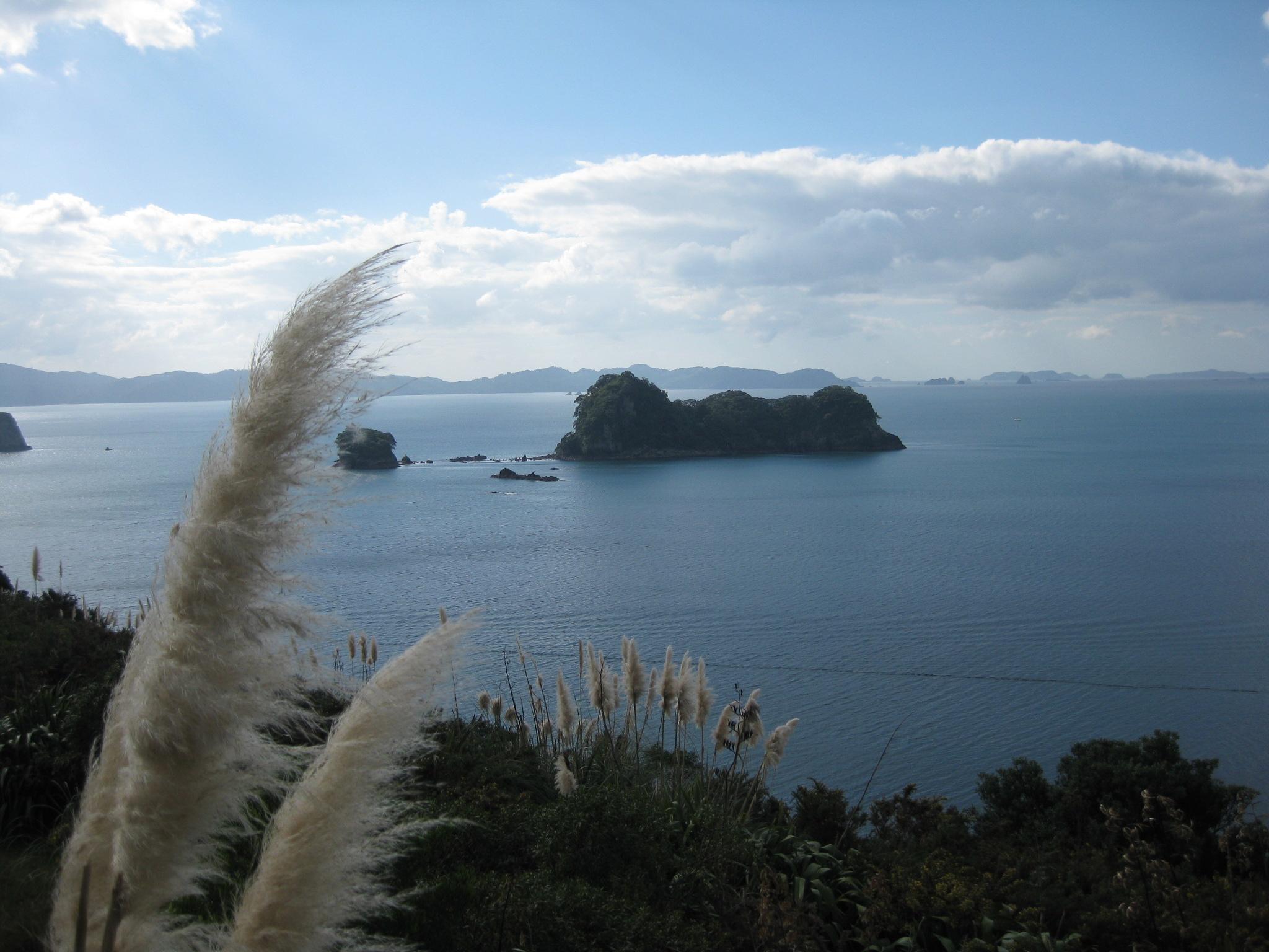Nouvelle Zélande - Cathedral Cove - Les lubies de Louise (13)