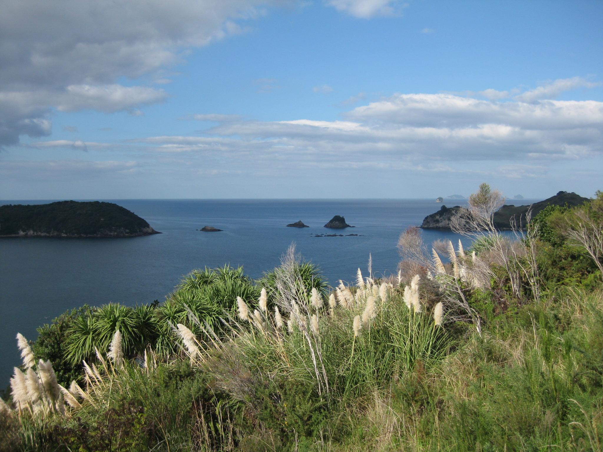 Nouvelle Zélande - Cathedral Cove - Les lubies de Louise (14)