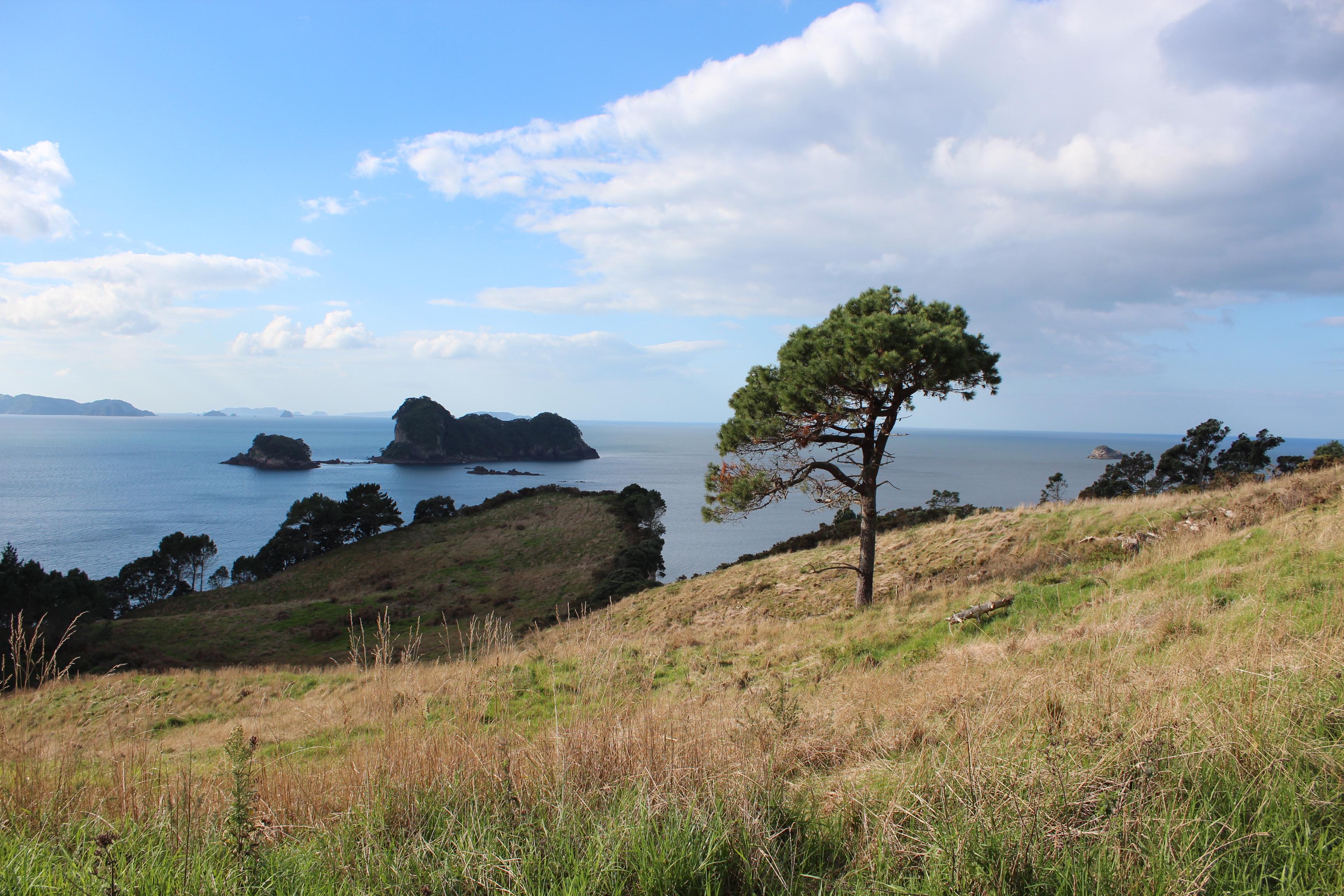 Nouvelle Zélande - Cathedral Cove - Les lubies de Louise (8)