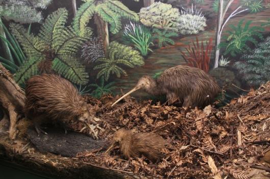 Nouvelle zélande - Kiwi House - Les lubies de Louise (9)