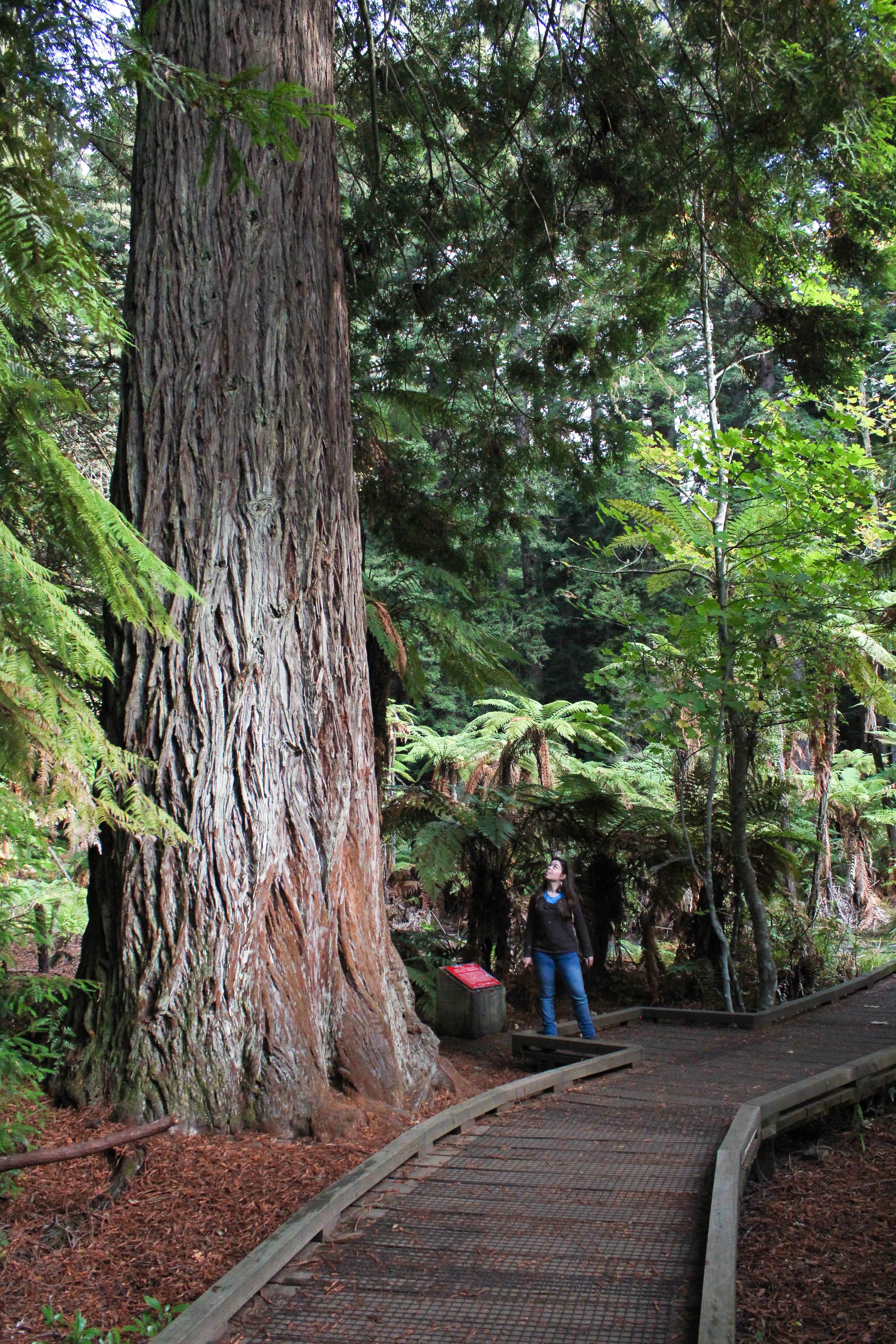 Nouvelle Zélande - Rotorua - Les lubies de louise (3 sur 11)