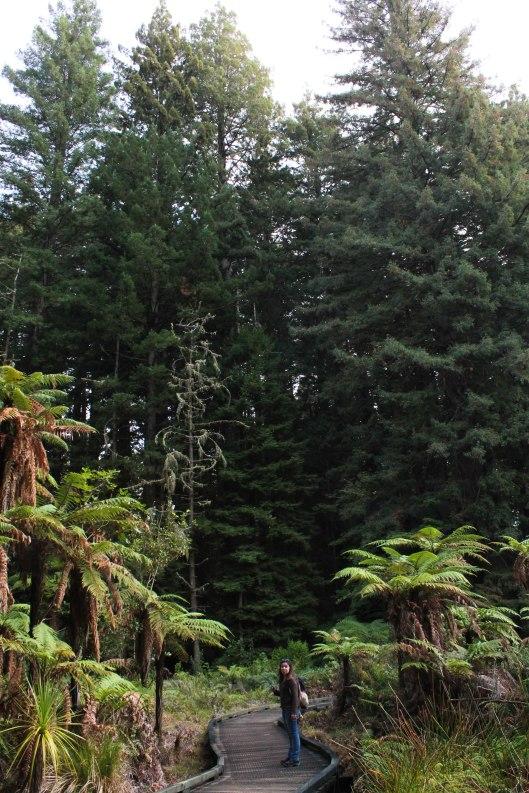 Nouvelle Zélande - Rotorua - Les lubies de louise (4 sur 11)