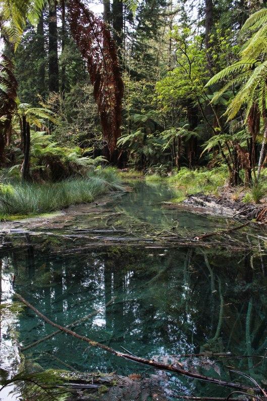 Nouvelle Zélande - Rotorua - Les lubies de louise (5 sur 11)