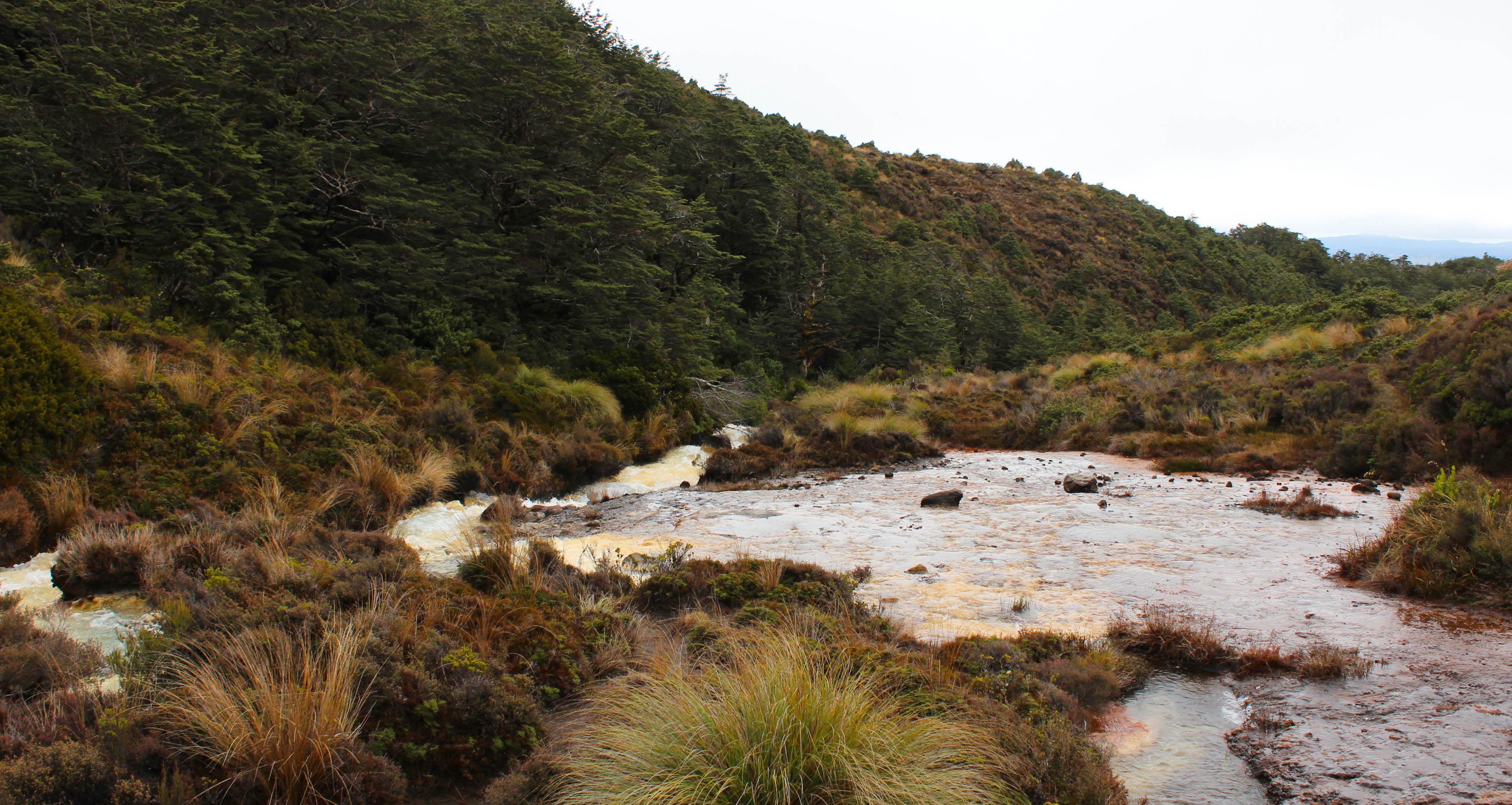 Nouvelle Zélande - Tongariri national parc - Les lubies de louise (10 sur 25)