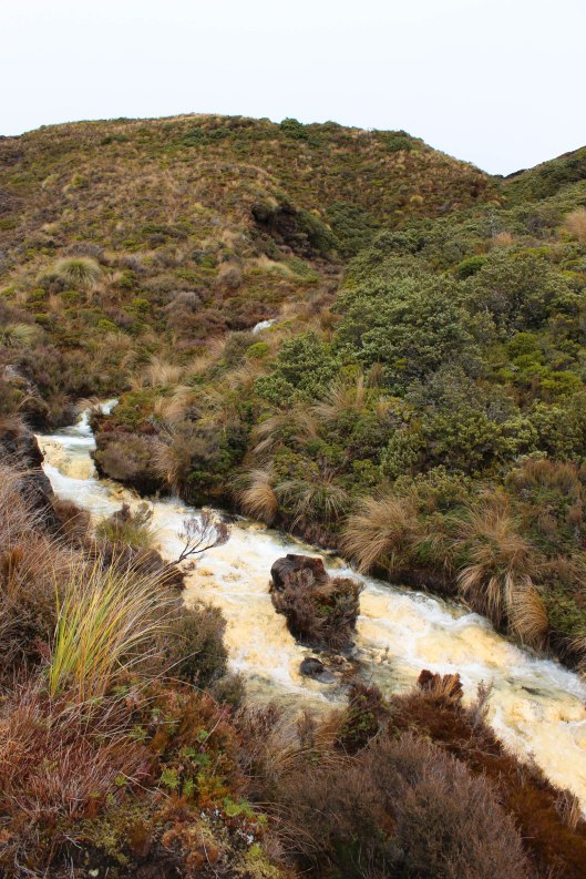 Nouvelle Zélande - Tongariri national parc - Les lubies de louise (11 sur 25)