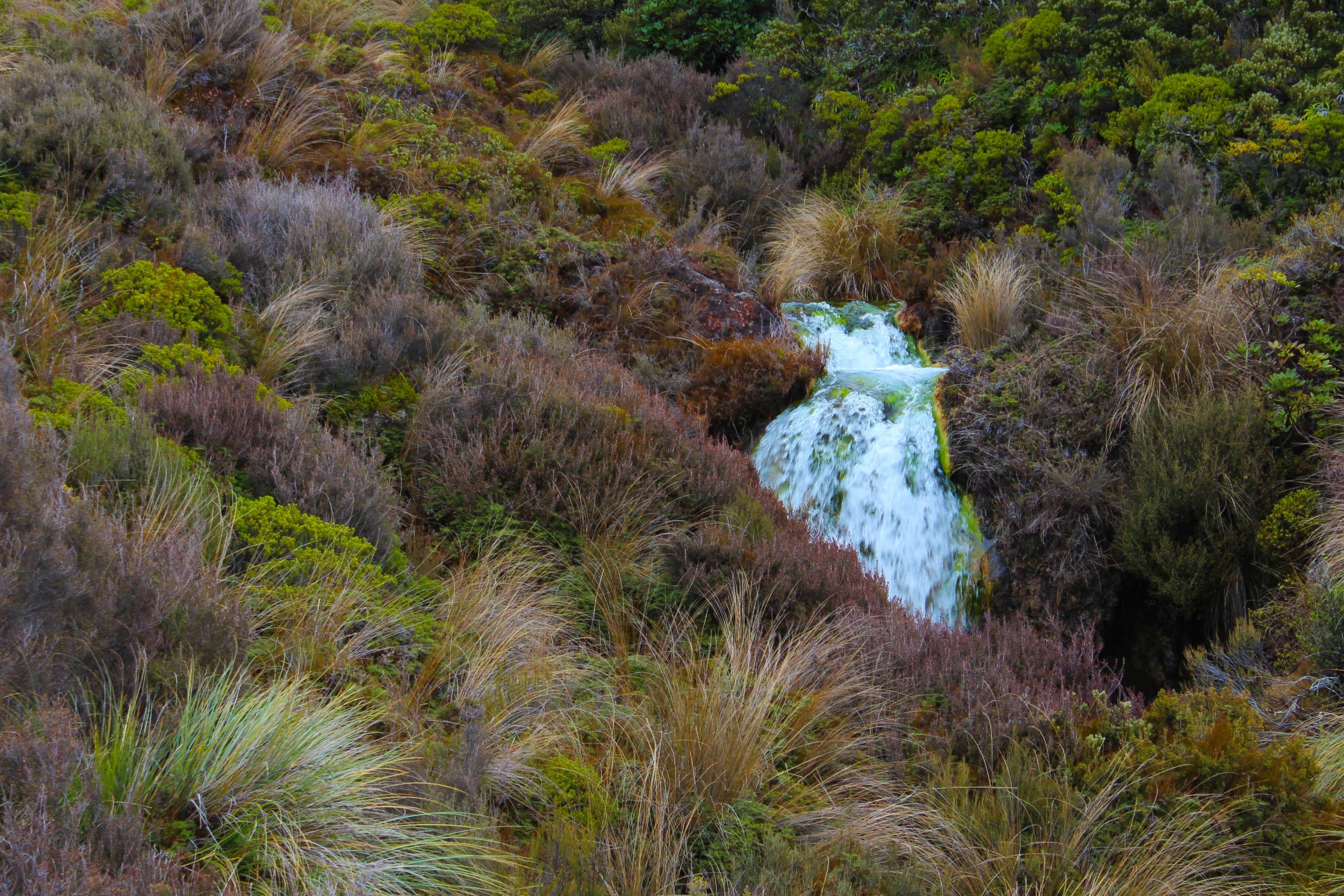 Nouvelle Zélande - Tongariri national parc - Les lubies de louise (12 sur 25)