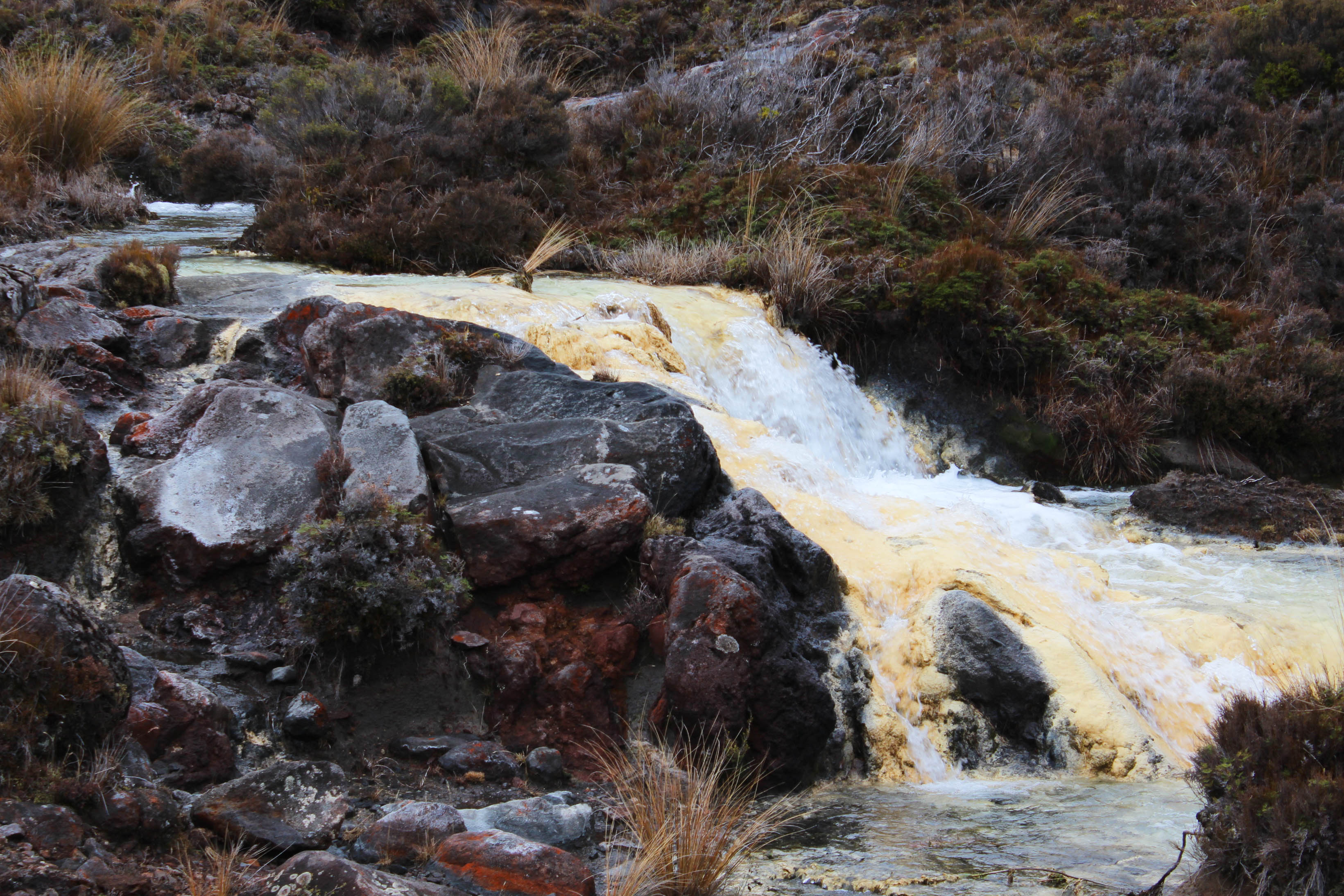 Nouvelle Zélande - Tongariri national parc - Les lubies de louise (13 sur 25)