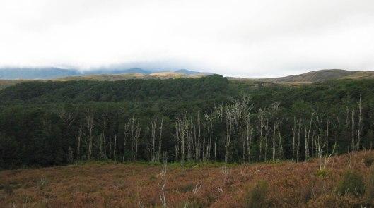 Nouvelle Zélande - Tongariri national parc - Les lubies de louise (15 sur 25)