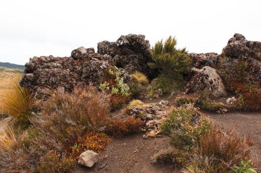Nouvelle Zélande - Tongariri national parc - Les lubies de louise (16 sur 25)