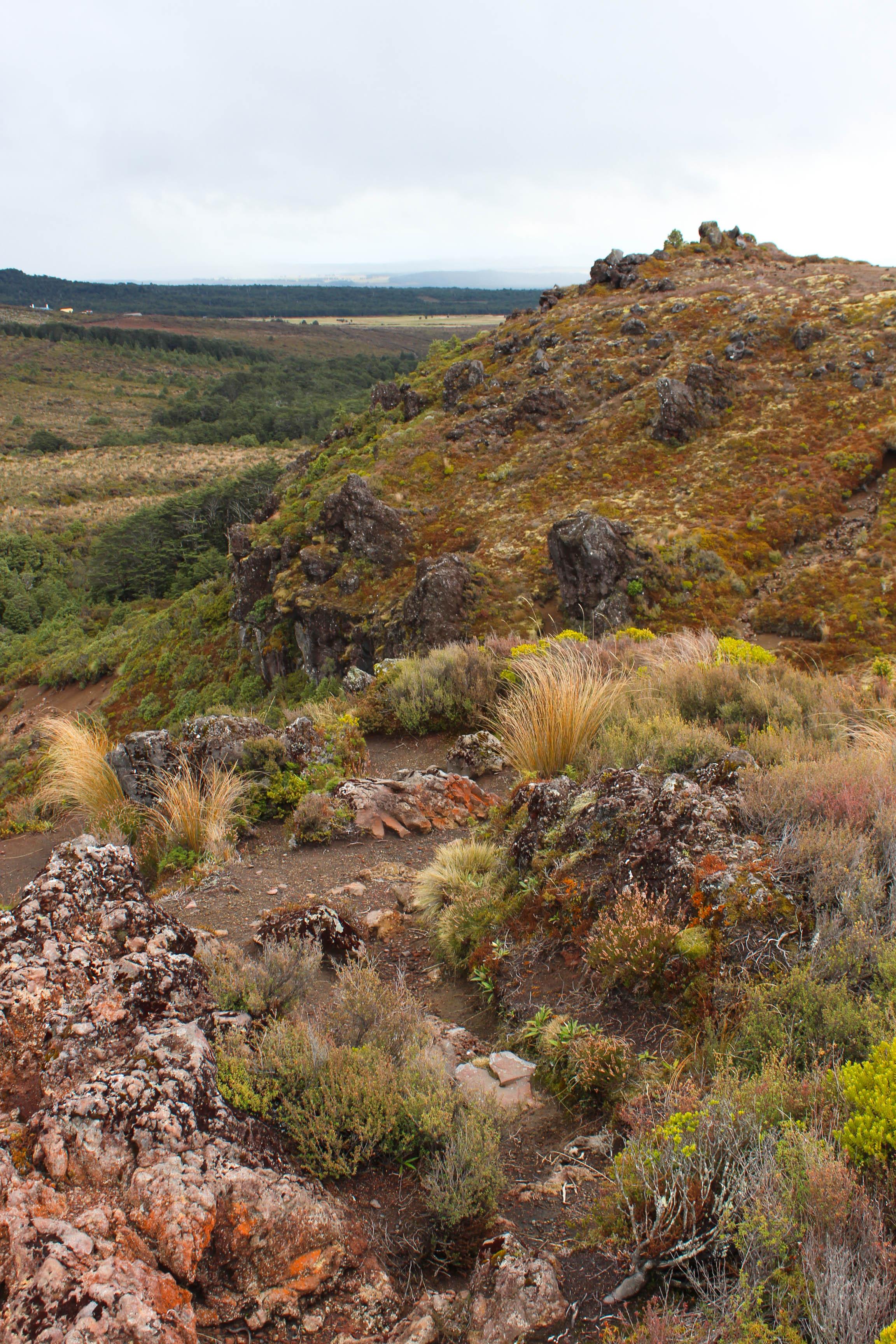 Nouvelle Zélande - Tongariri national parc - Les lubies de louise (17 sur 25)