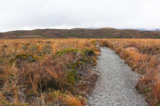 Nouvelle Zélande - Tongariri national parc - Les lubies de louise (18 sur 25)