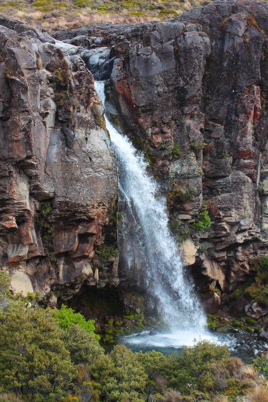 Nouvelle Zélande - Tongariri national parc - Les lubies de louise (19 sur 25)