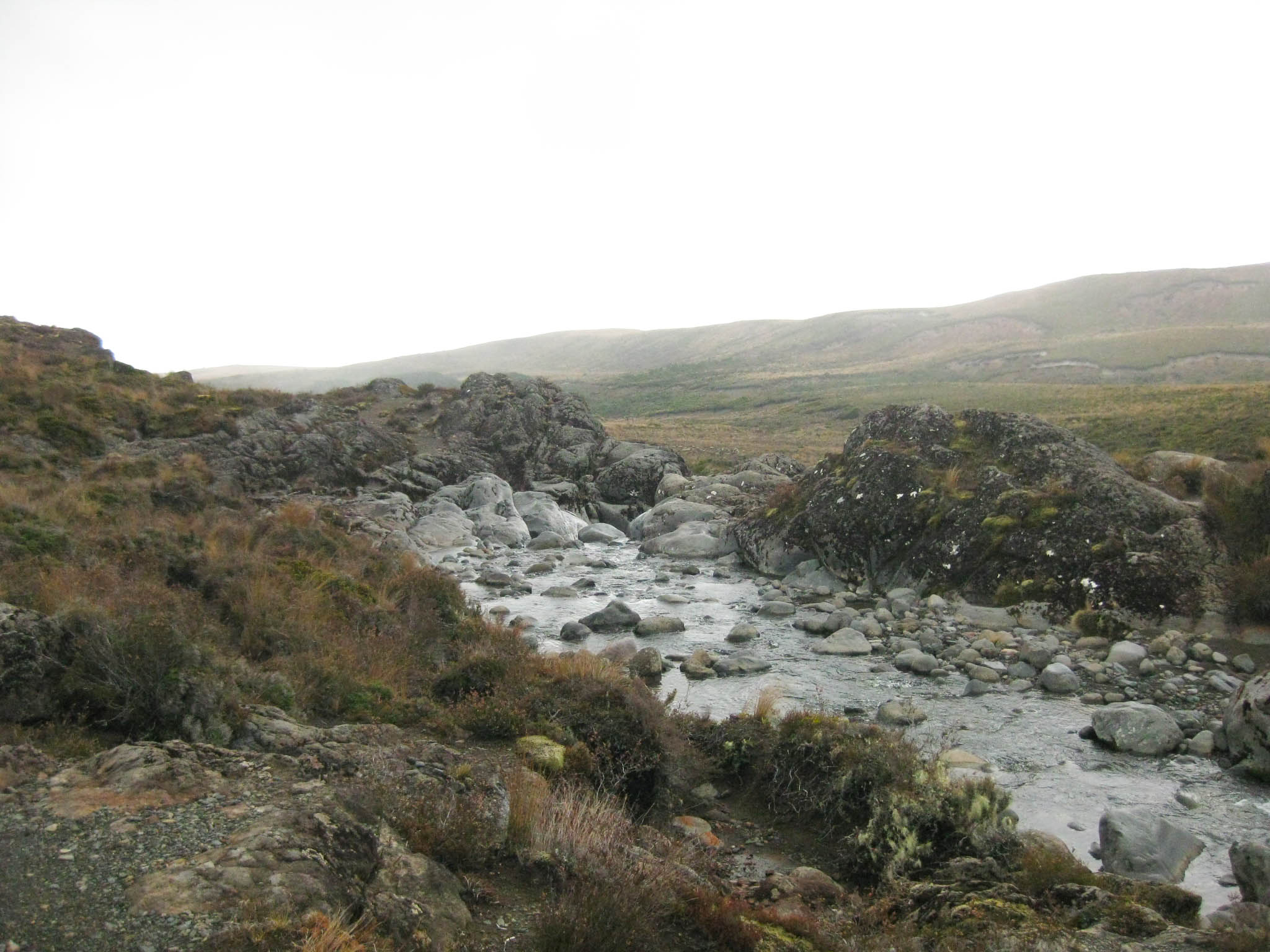 Nouvelle Zélande - Tongariri national parc - Les lubies de louise (21 sur 25)