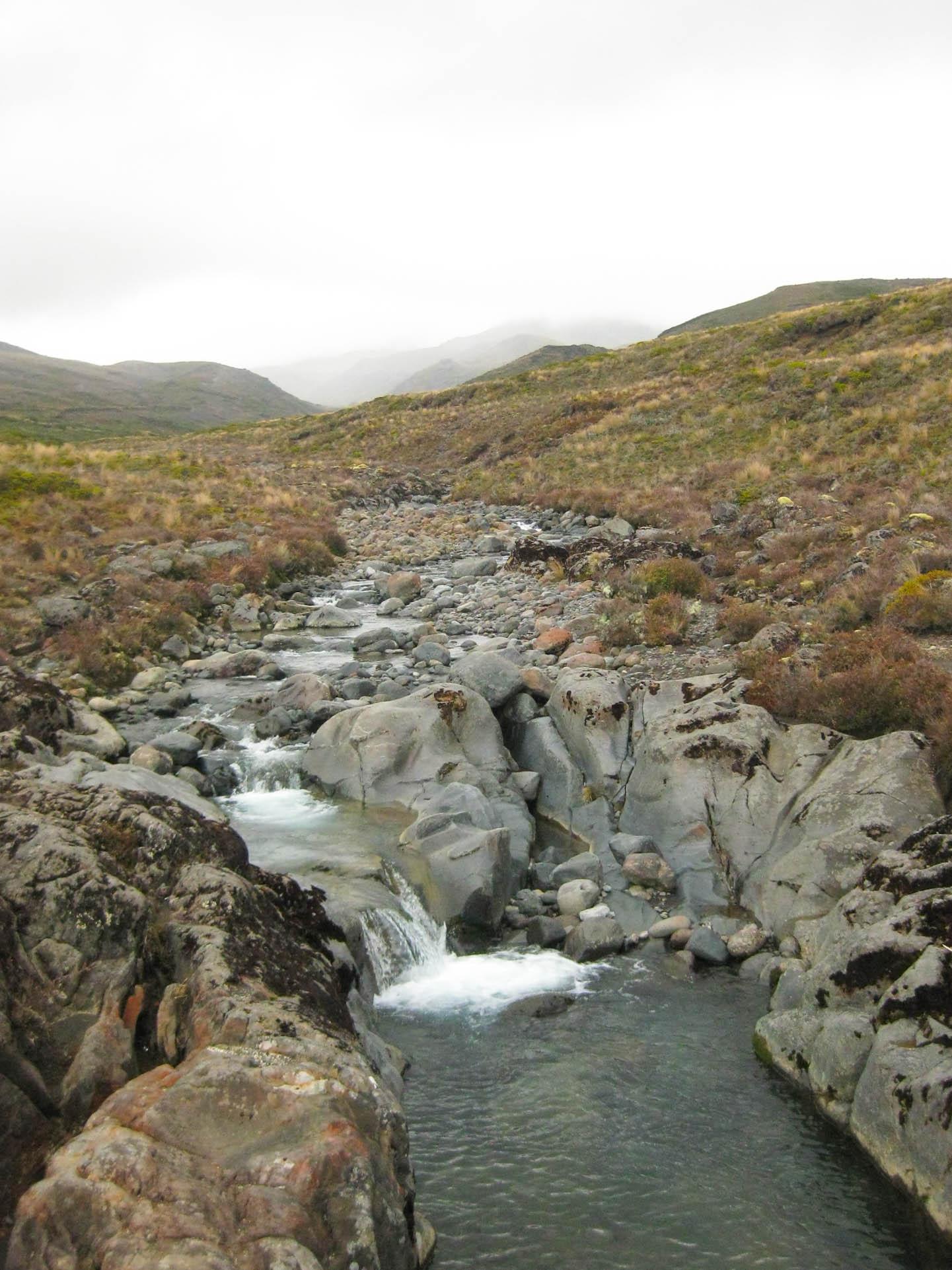 Nouvelle Zélande - Tongariri national parc - Les lubies de louise (22 sur 25)