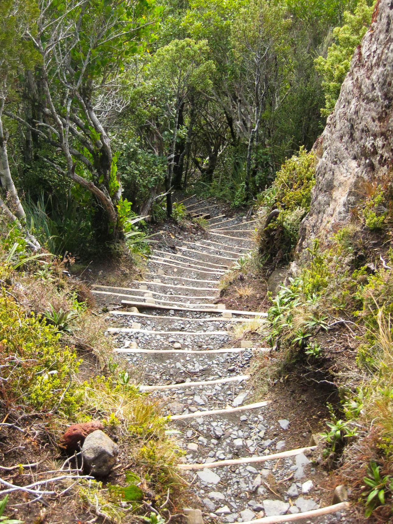 Nouvelle Zélande - Tongariri national parc - Les lubies de louise (23 sur 25)