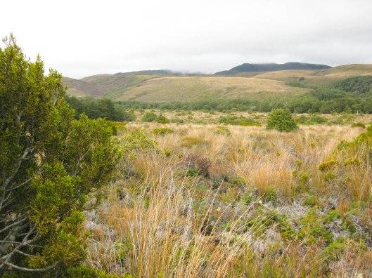 Nouvelle Zélande - Tongariri national parc - Les lubies de louise (25 sur 25)