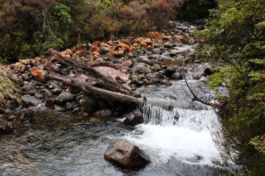 Nouvelle Zélande - Tongariri national parc - Les lubies de louise (7 sur 25)