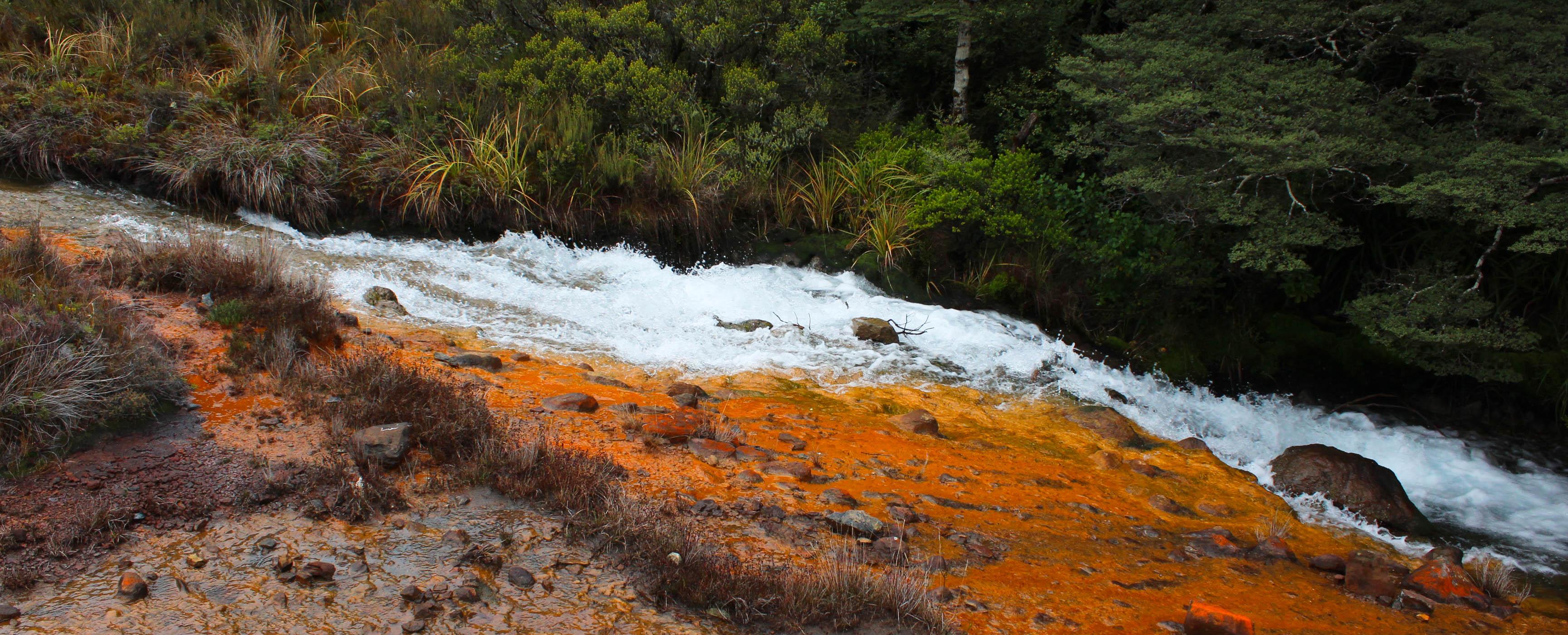 Nouvelle Zélande - Tongariri national parc - Les lubies de louise (8 sur 25)