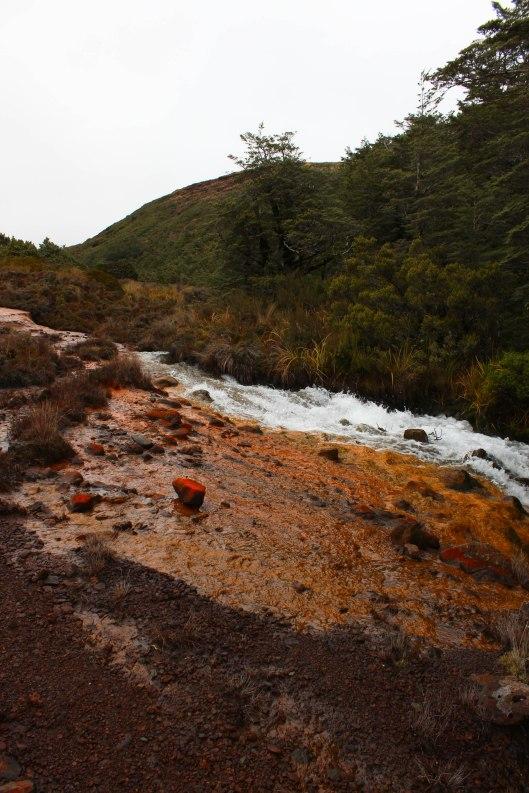 Nouvelle Zélande - Tongariri national parc - Les lubies de louise (9 sur 25)