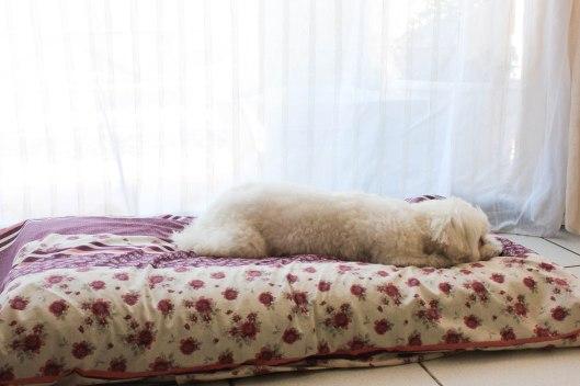 Tapis de luxe Flora - DIY tapis pour chien - les lubies de Louise (1 sur 8)