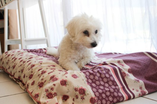 Tapis de luxe Flora - DIY tapis pour chien - les lubies de Louise (5 sur 8)
