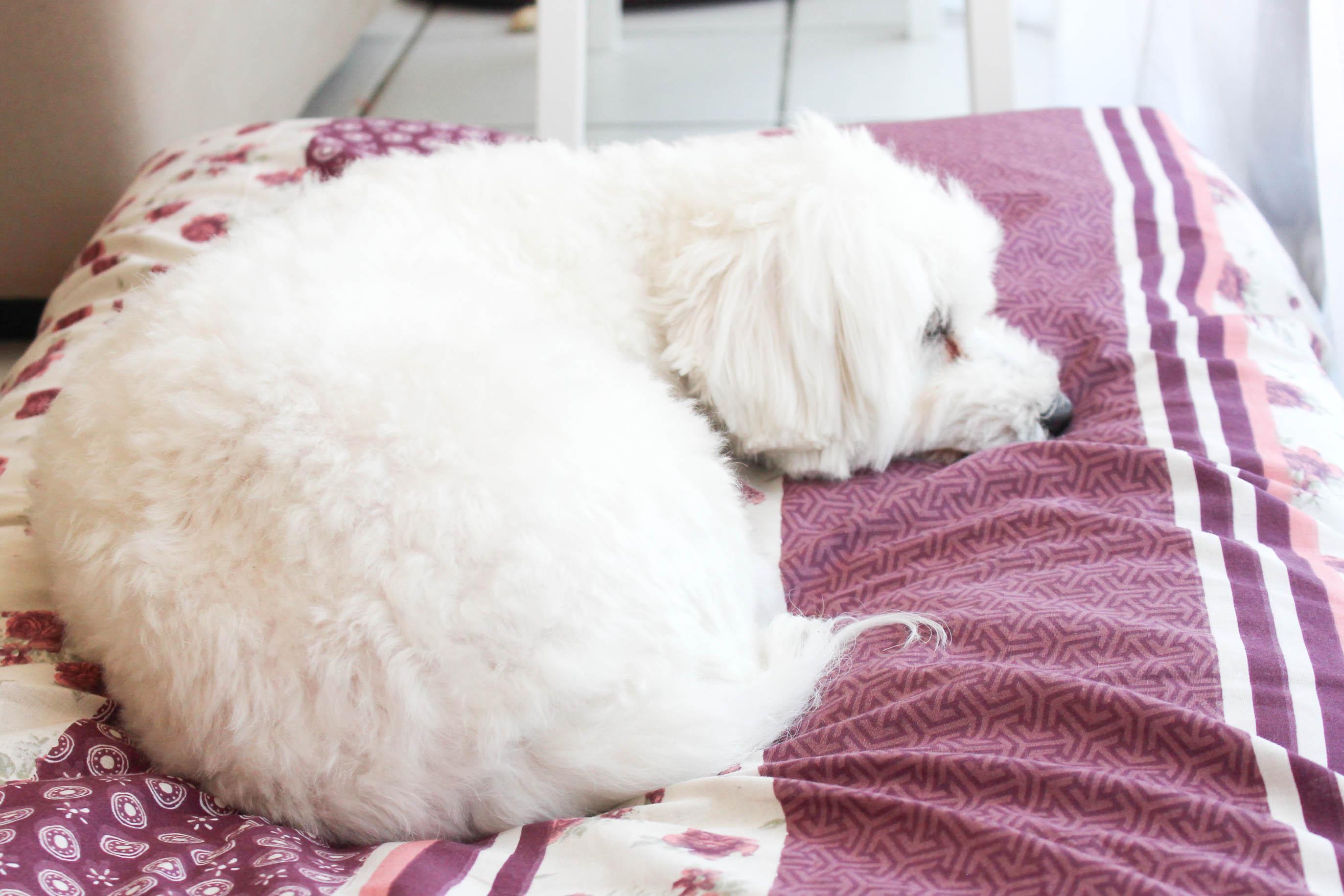 Tapis de luxe Flora - DIY tapis pour chien - les lubies de Louise (6 sur 8)