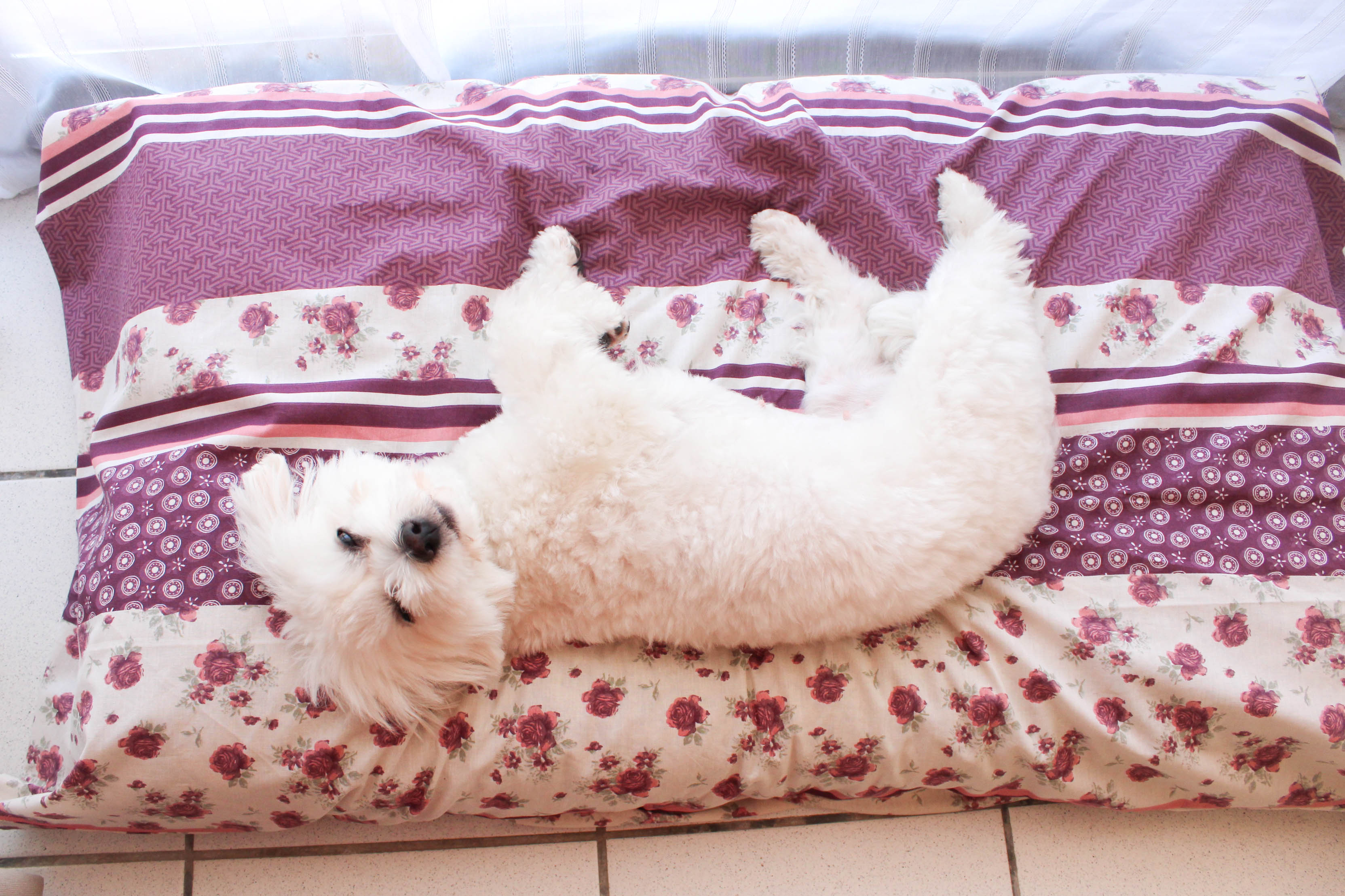Tapis de luxe Flora - DIY tapis pour chien - les lubies de Louise (7 sur 8)