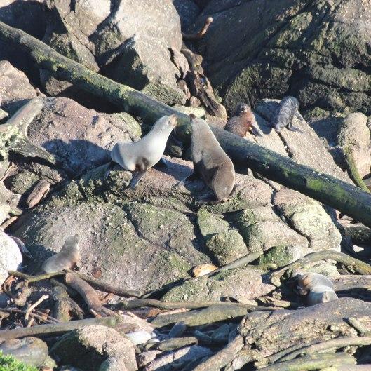 Nouvelle Zélande - Cape Foulwind - les lubies de louise (10 sur 21)