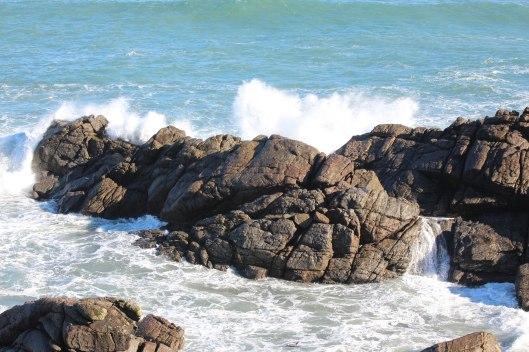 Nouvelle Zélande - Cape Foulwind - les lubies de louise (12 sur 21)