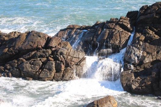 Nouvelle Zélande - Cape Foulwind - les lubies de louise (13 sur 21)