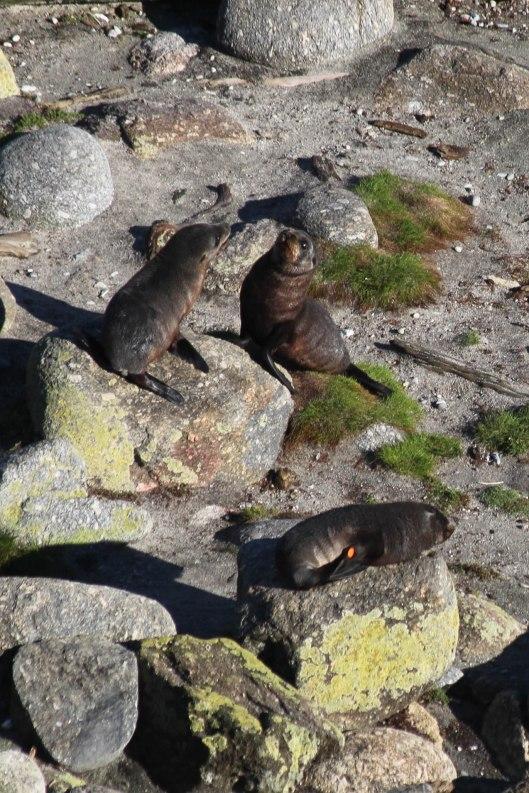 Nouvelle Zélande - Cape Foulwind - les lubies de louise (4 sur 21)