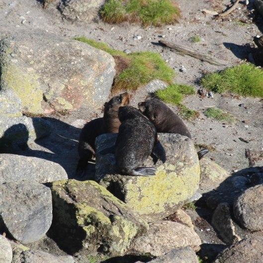 Nouvelle Zélande - Cape Foulwind - les lubies de louise (8 sur 21)