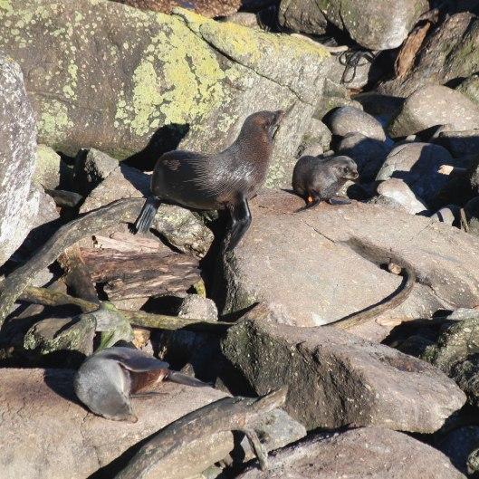 Nouvelle Zélande - Cape Foulwind - les lubies de louise (9 sur 21)
