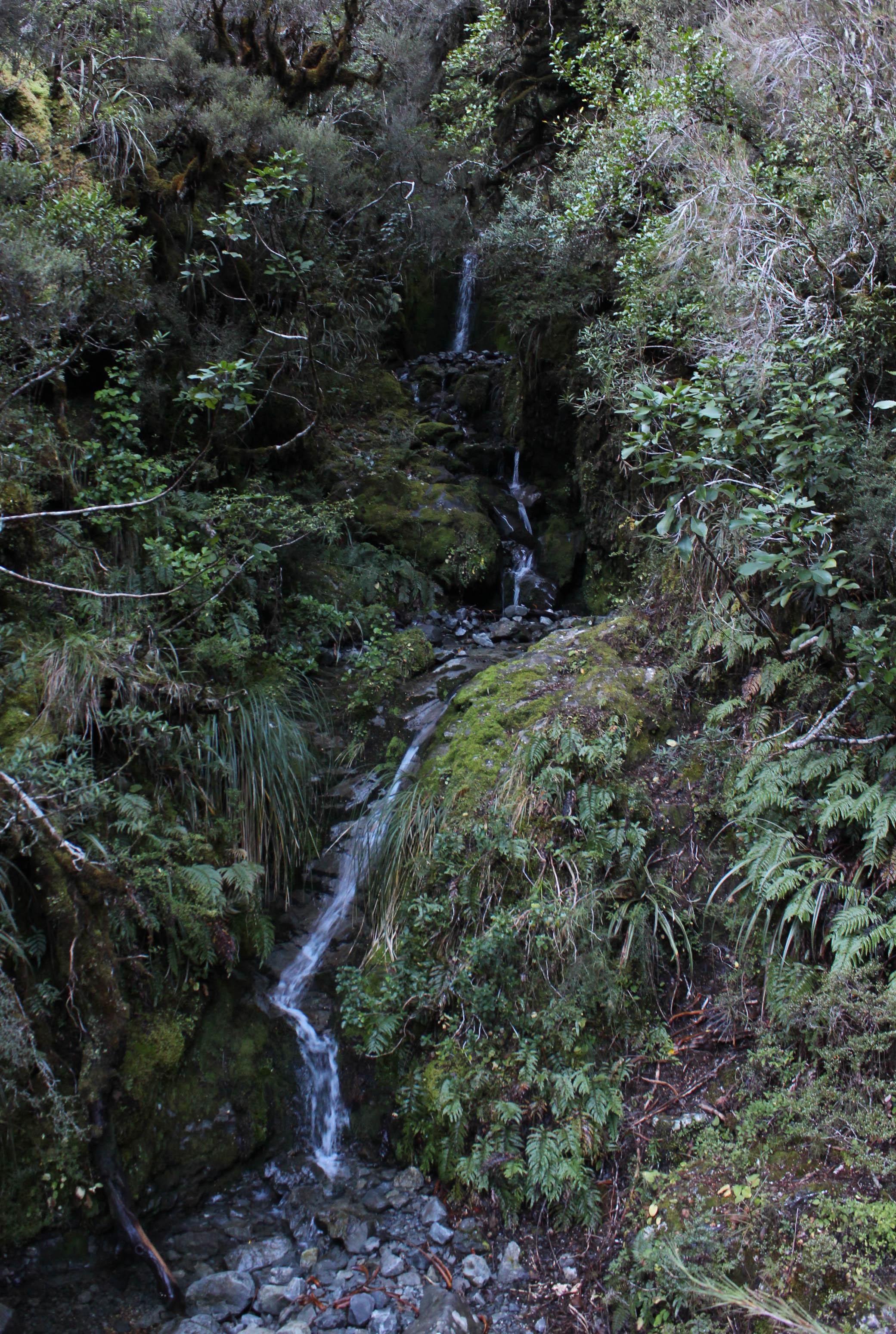 Nouvelle Zélande - Greymouth et Arthur's pass - les lubies de louise (16 sur 21)