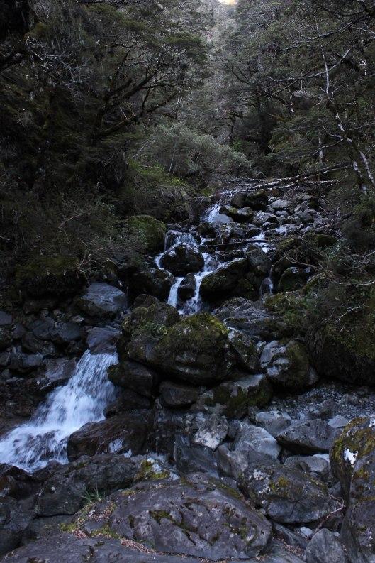 Nouvelle Zélande - Greymouth et Arthur's pass - les lubies de louise (19 sur 21)