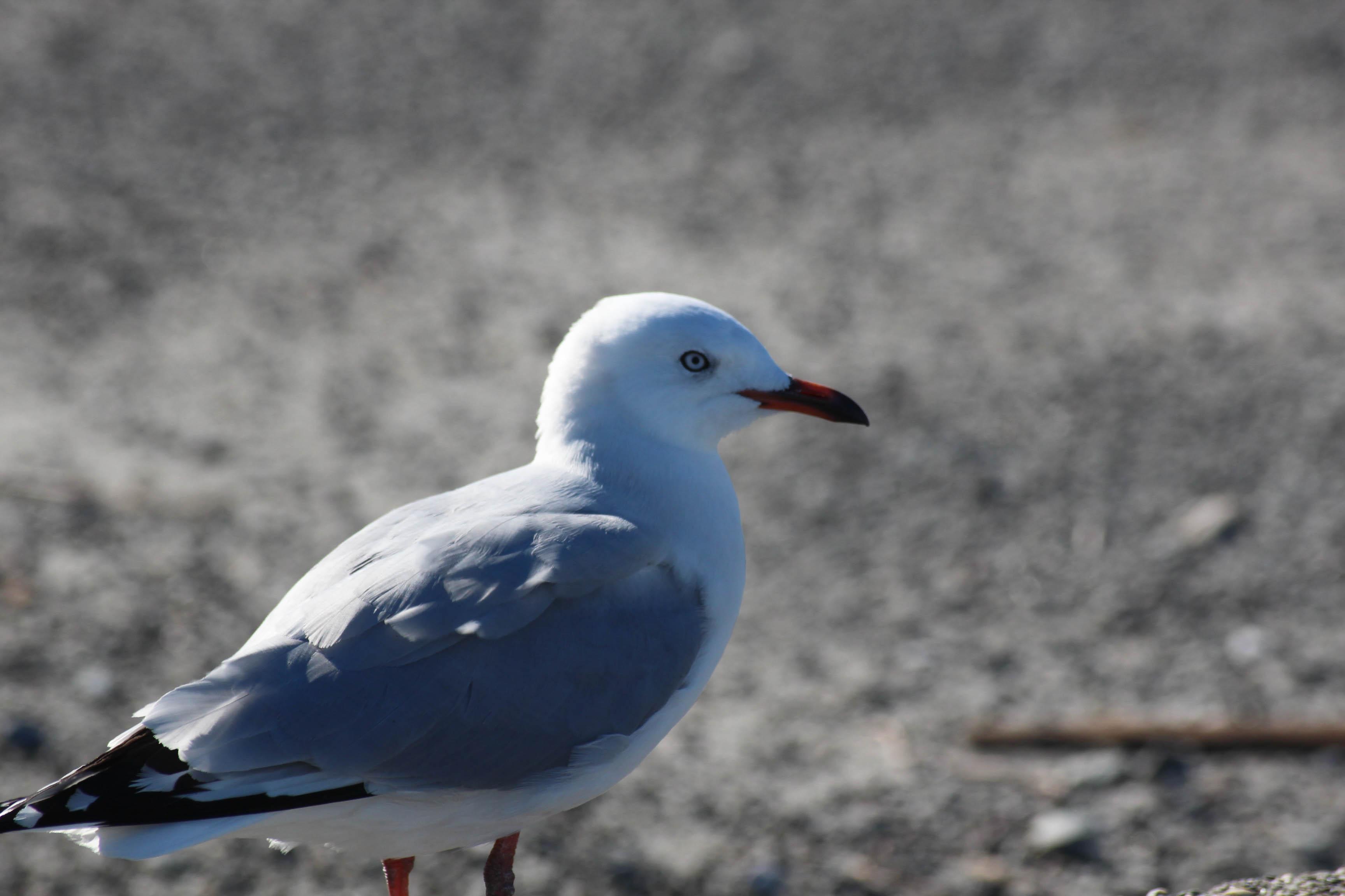 Nouvelle Zélande - Greymouth et Arthur's pass - les lubies de louise (3 sur 21)