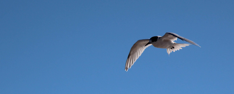 Nouvelle Zélande - Greymouth et Arthur's pass - les lubies de louise (4 sur 21)