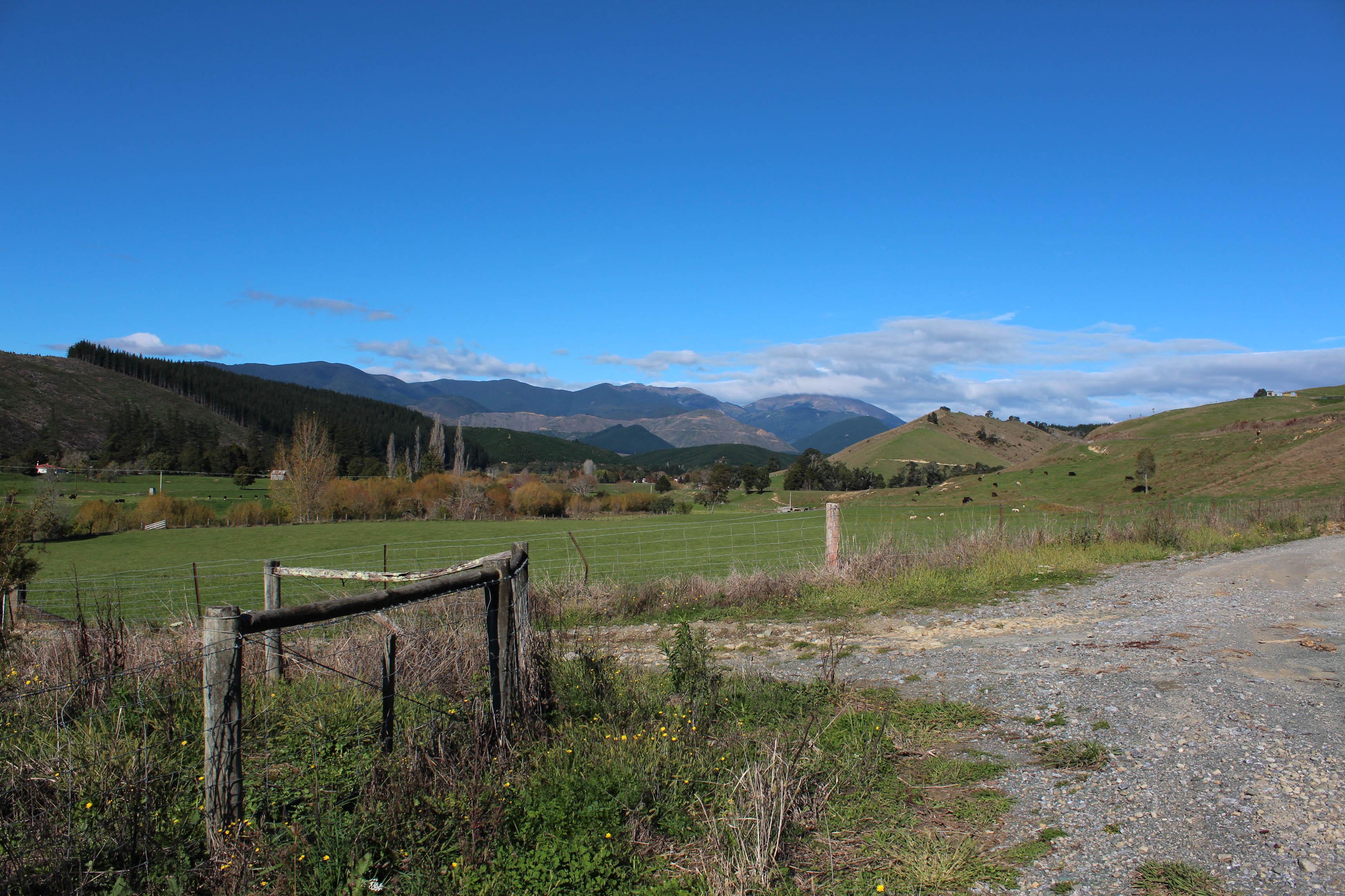 Nouvelle Zélande - Nelson & buller gorge swingbridge - les lubies de Louise (10 sur 42)