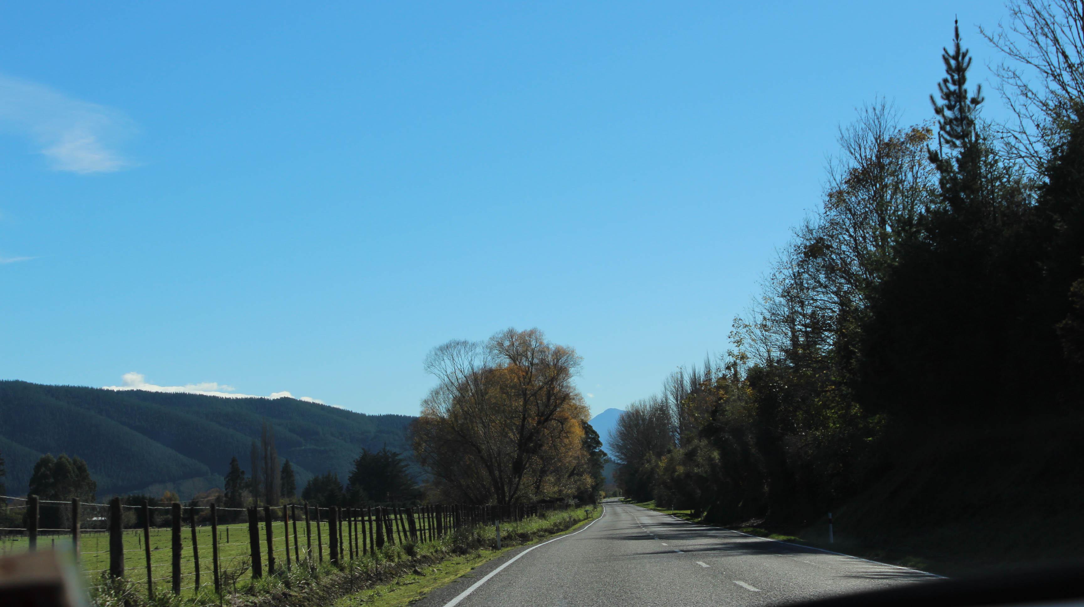 Nouvelle Zélande - Nelson & buller gorge swingbridge - les lubies de Louise (13 sur 42)