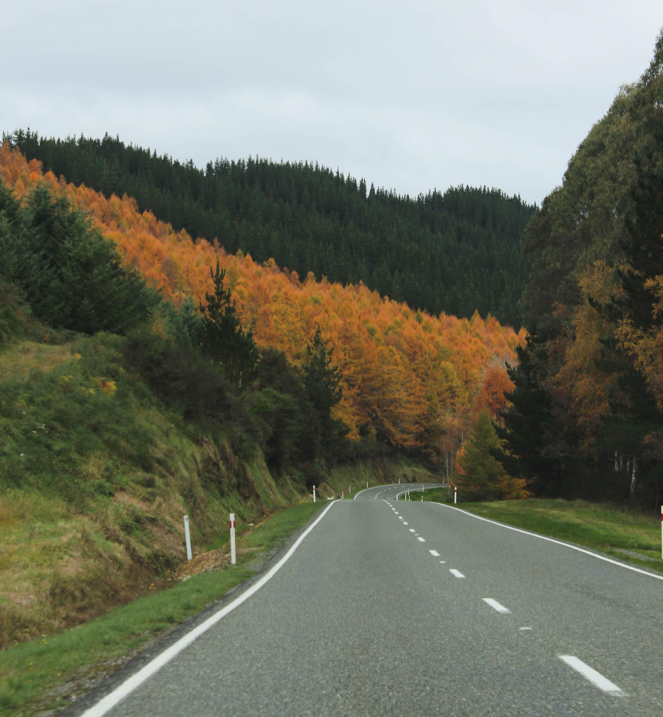 Nouvelle Zélande - Nelson & buller gorge swingbridge - les lubies de Louise (14 sur 42)