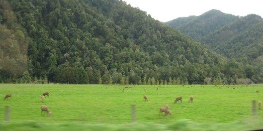 Nouvelle Zélande - Nelson & buller gorge swingbridge - les lubies de Louise (17 sur 42)