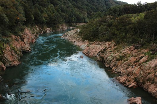 Nouvelle Zélande - Nelson & buller gorge swingbridge - les lubies de Louise (19 sur 42)