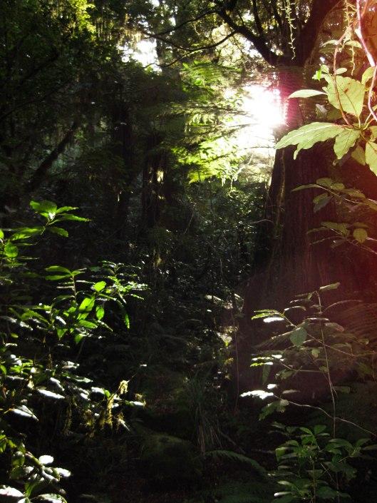 Nouvelle Zélande - Nelson & buller gorge swingbridge - les lubies de Louise (34 sur 42)
