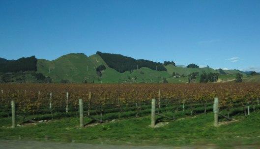 Nouvelle Zélande - Nelson & buller gorge swingbridge - les lubies de Louise (9 sur 42)