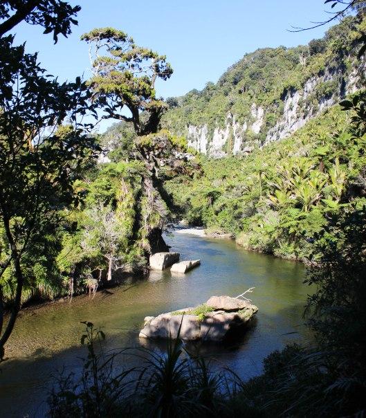 Nouvelle Zélande - Punakaiki - les lubies de louise (2 sur 11)