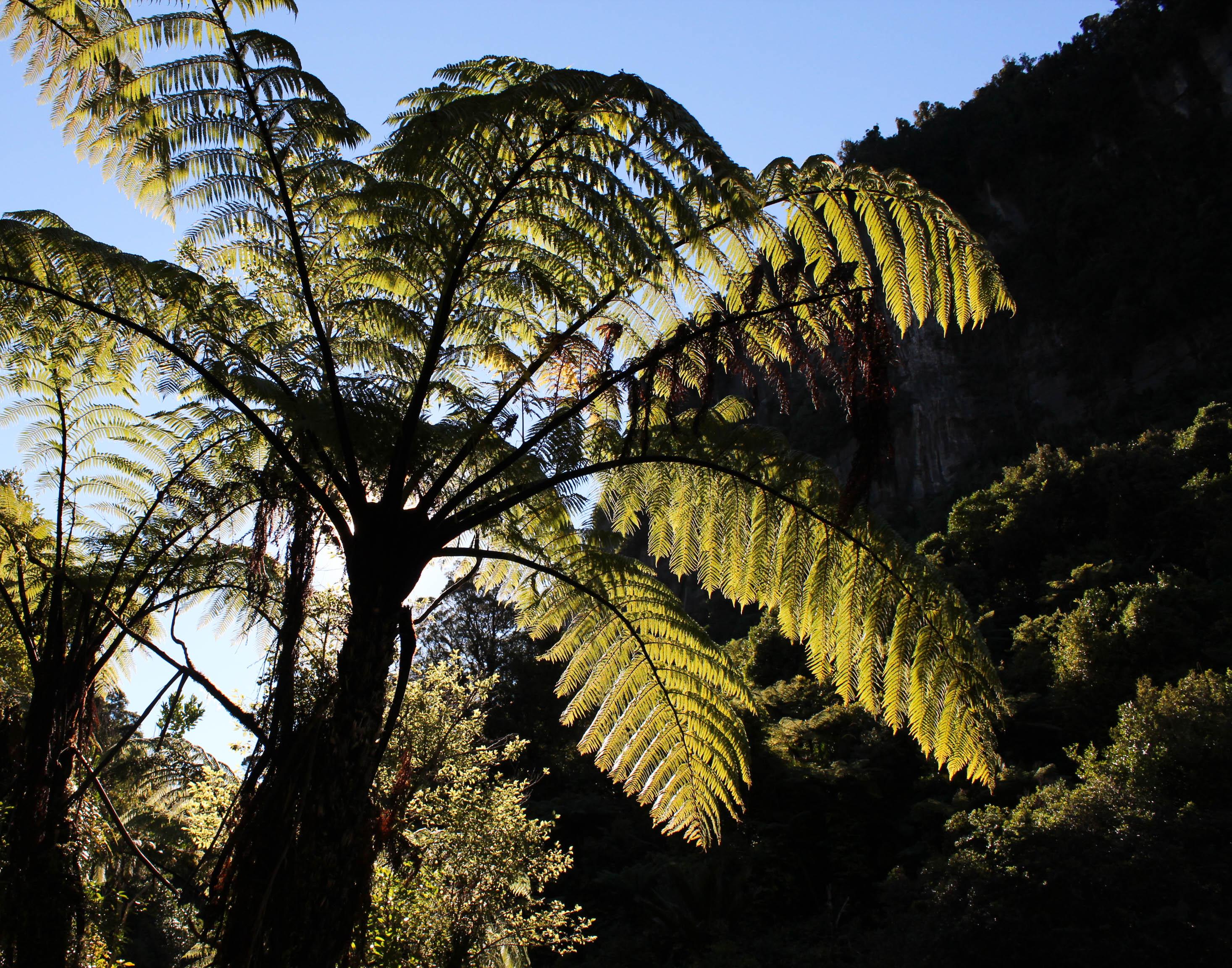 Nouvelle Zélande - Punakaiki - les lubies de louise (4 sur 11)