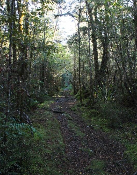 Nouvelle Zélande - Punakaiki - les lubies de louise (6 sur 11)