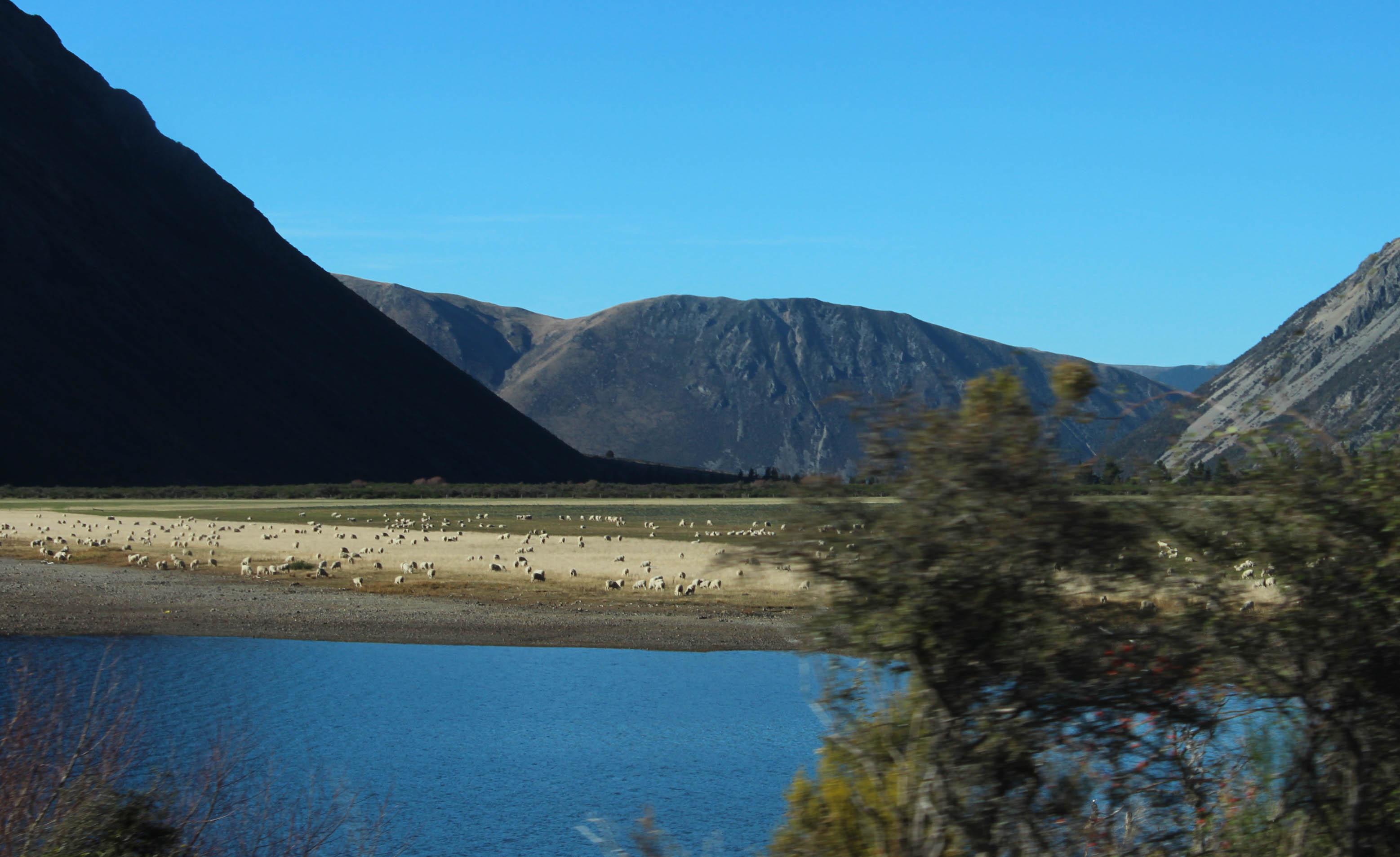 Nouvelle Zélande - Arthur's pass & Akaroa - les lubies de louise (10 sur 46)