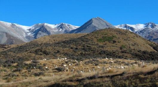 Nouvelle Zélande - Arthur's pass & Akaroa - les lubies de louise (14 sur 46)